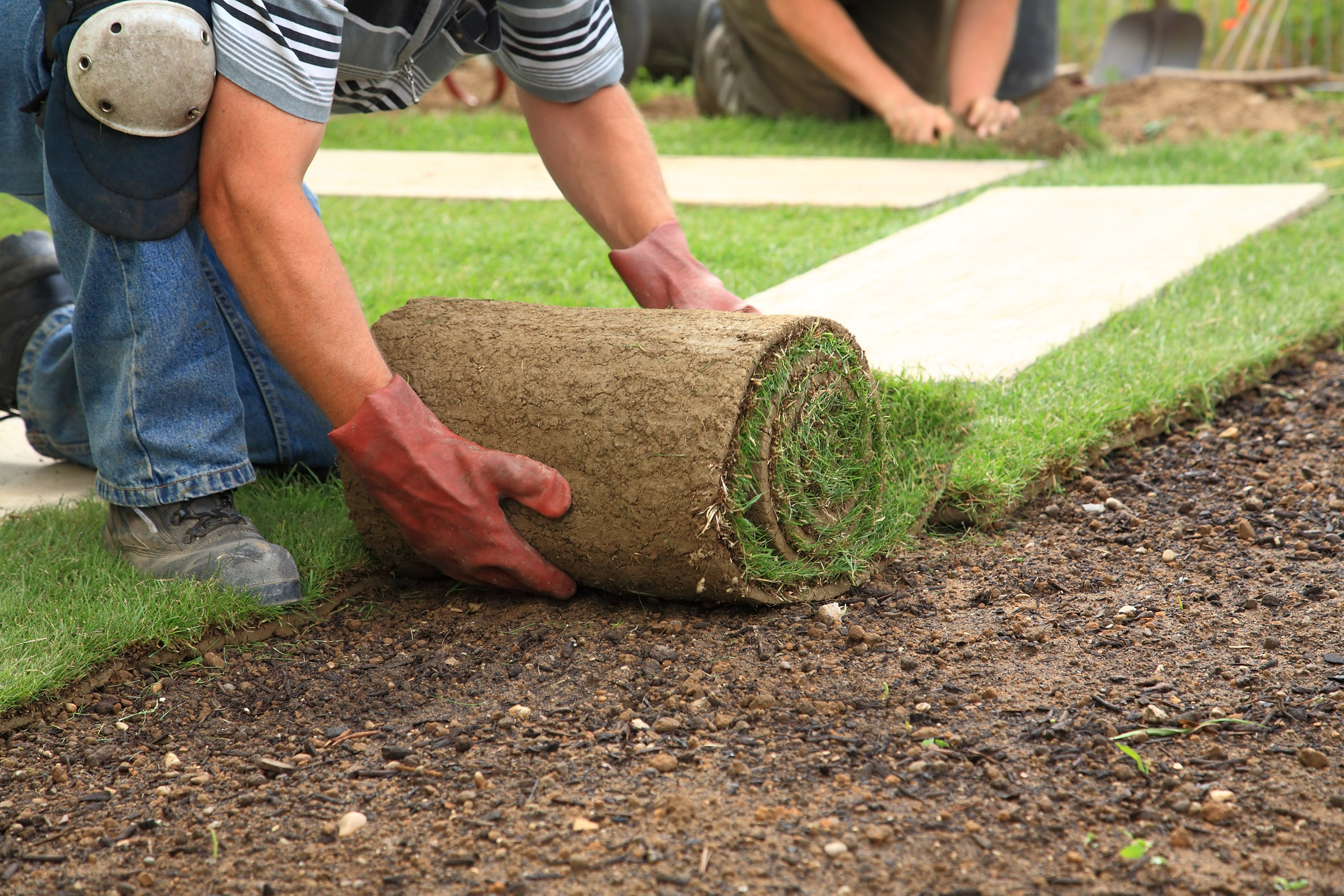 photodune-1198069-laying-sod-for-new-lawn-l