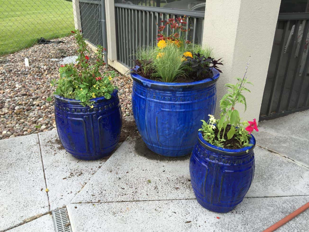 custom potted annuals | cedar valley lawn care