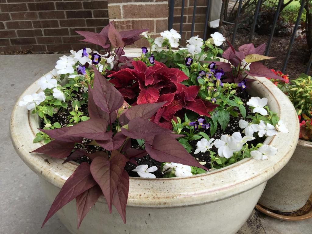 porch flowers single pot